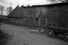 Stodoła ryglowa z chlewem - Nowa Wieś Kartuska