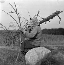 Katarzyna Maniakowa przy zbieraniu opału