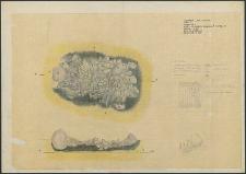 Grzybnica - rzut i przekrój paleniska (stosu), Krąg Nr 2. Stan. 1