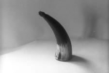 Tabakierka rogowa w kształcie rożka