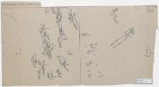 Koszalin - Góra Chełmska, stan. 1. Rzut poziomy grobów Ar. 23 (5-1959 r.), Ćwiartka C.D (D.B)