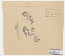 Koszalin - Góra Chełmska, stan. 1. Plan w 13/61, wykop II Ar 34/33 ćw. B/A