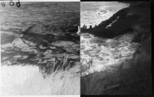 Podmyte i zniszczone przez sztorm nadbrzeże w Ustce